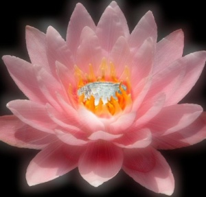 jewel-in-lotus-shelli-todd